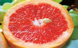 Grapefreuitkerne - wertvoll für die Gesundheit