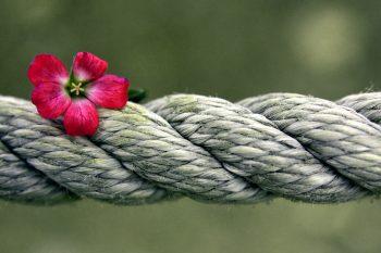 Stärke - Blume